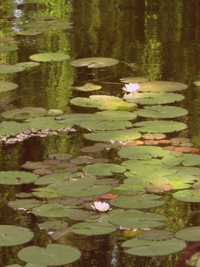 Monet's Garden, The Water Lily Pond (1)